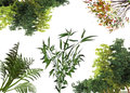 Struik-haag-Riet-plant