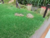 Gras-donker-groen-4-mm-strooi-gras-1:32-EXPECTED