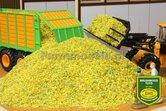 78036-Bulk-Maïs-Silage-Gehakselde-maïs-middel-fijn-1:32-BT2077